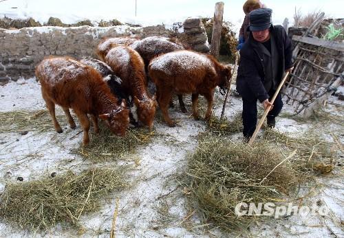 新疆阿勒泰地区粮食价格未有明显上涨迹象