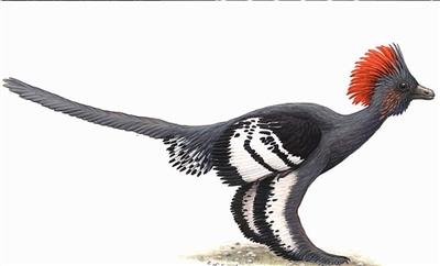 恐龙化��-a9��_中美首次为恐龙化\