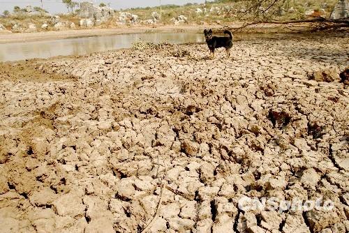 云南遭受60年一遇严重旱灾目前旱情还在持续