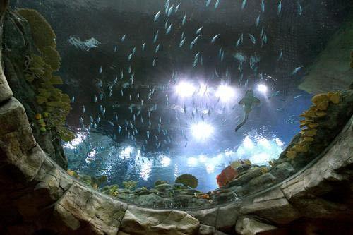 香港首创及唯一的旋转式长管形水族箱高达8米,将有过千条牛奶鱼畅游其中.