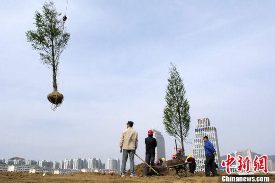 """4月18日,山东青岛海尔路工人们种植水杉。近日,一则青岛为打造""""国家森林城市""""而""""毁草种树""""的消息将该市推向风口浪尖,随即,这一指责升级为市民对一年投资40亿元财政启动""""植树增绿""""工程的深层次质疑。中新社发 廖攀 摄"""
