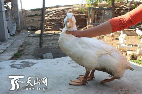 7条腿的动物图片