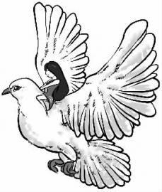 放别人鸽子的表情包_放鸽子表情包