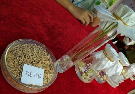 2014年5月16日,湖北省第十四届科技活动周开幕式在宜昌市夷陵广场举行,来自华中农业大学的科技人员展示的转基因水稻。