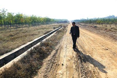 10月17日,房山区南正村,当年的古墓群考古现场已经回填成树林。新京报记者 浦峰 摄