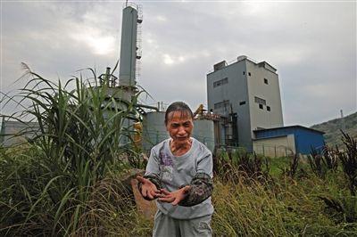 龙珠村村民郭松玉的房门正对着工厂铁围栏,距离仅约20米。按环评要求,居民须迁走后企业才可生产。