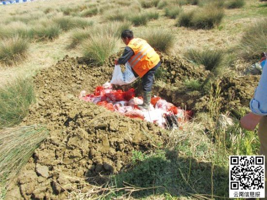 缴获的死牛和肉制品被销毁。警方供图