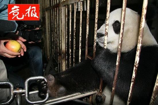 但北京动物园狮虎馆的