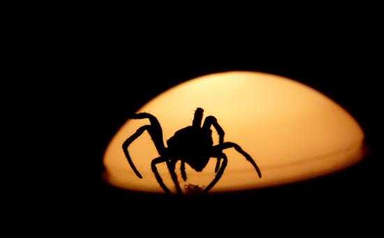 图文:奔向太阳的蜘蛛