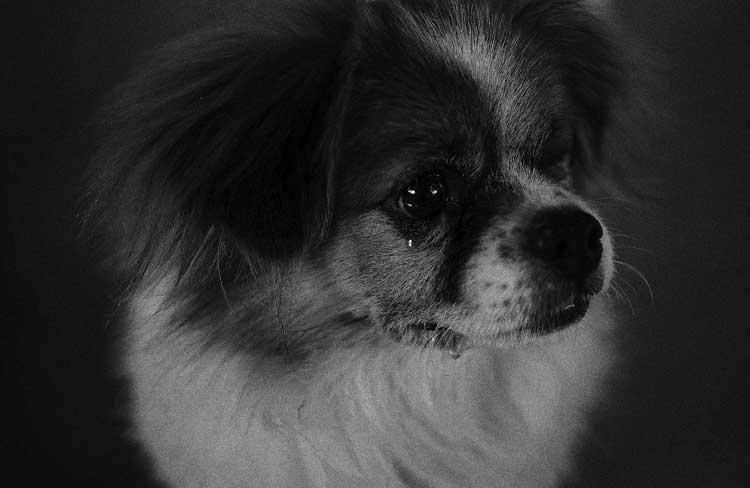 流浪狗图片,宠物壁纸图片,狗狗图片 - 太原宠物