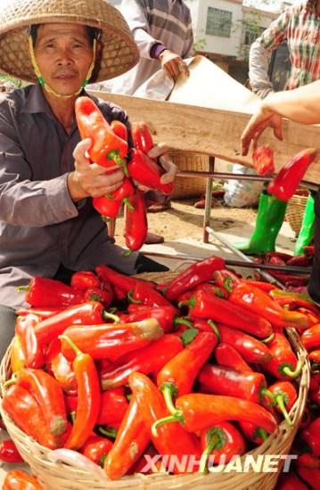 组图:海南琼海农民倒掉大量滞销辣椒