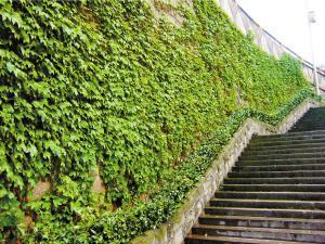 渝中区园林绿化优秀候选项目形象展示