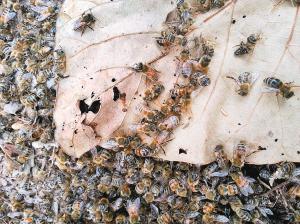 480箱笼子打架死亡大蜜蜂养仓鼠莫名么图片