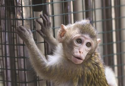 """去年10月,红山动物园灵长馆出生了一只食蟹猴宝宝""""小七"""",不过,"""""""
