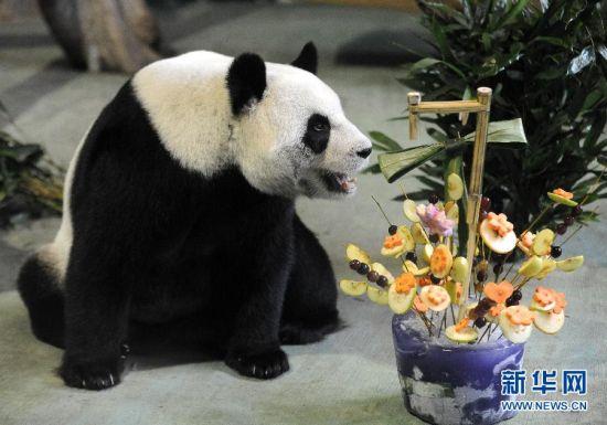 """8月30日和9月1日分别是大熊猫""""团团""""和""""圆圆""""的生日。"""
