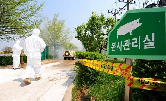韩国又发现9名疑似猪流感病例(图)