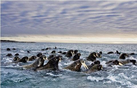 蔚为壮观的野生动物大迁徙(图)