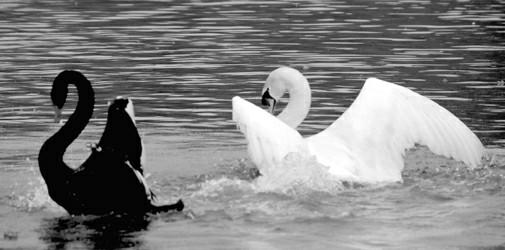 数只野鹭同栖在一棵树上杨建正   千鸟栖息,万鸟齐飞。上海动物园的天鹅湖已有五十多年历史,它由几个天然水塘开挖连成,因饲养天鹅而得名。这里每天有不少鸟类在上空盘旋。湖中共有五个小岛,完美的生态环境,使得这个天鹅湖成了沪上鸟儿栖息的选择点之一,每年有成千上万只鸟飞到这里筑巢、产卵,也成为市民游客观鸟的好去处。