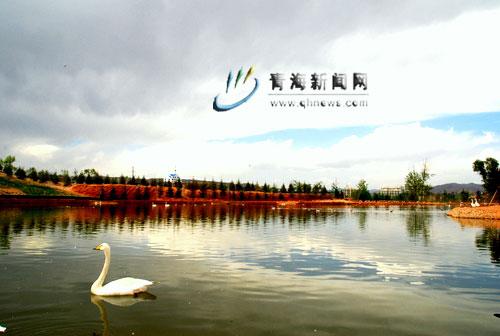 夏日青海高原野生动物园景色美(组图)