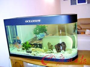 正确显示金鱼缸摆放家宅润环境cad为什么不了窗口打印美化出来图片
