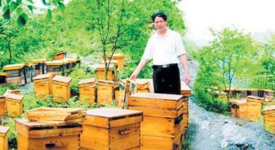 理李良昌在检查野外的蜜蜂喂养情况.(资料图片)-小小蜜蜂成就昌