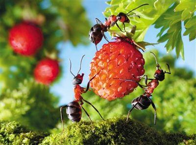 蚂蚁合作图片素材