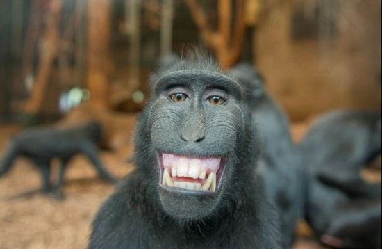 """笑一笑心情好 盘点动物界的""""表情帝""""(组图)"""