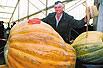 南瓜重达6百公斤