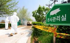 各国紧急应对猪流感疫情