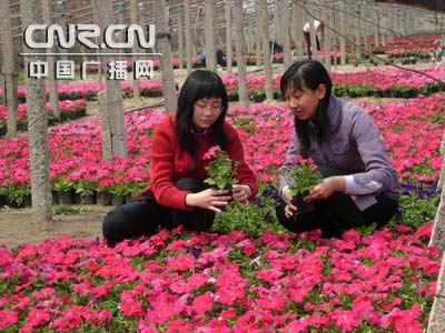鲜花缤纷迎五一顺义北务游人通关飨攻略红白机游戏冒险岛采摘花卉图片