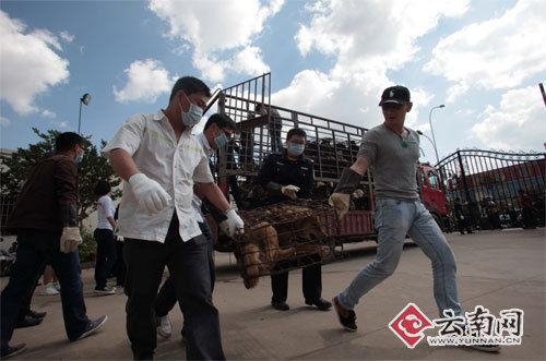 志愿者和民警把狗从车上卸下来 刘筱庆 摄