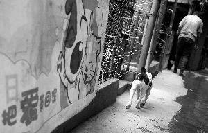"""土华植物救济站内,一只狗狗走过""""把爱带回家""""的宣扬画。但现实上,要在土华把漂泊狗和爱""""带回家"""",其实不那末简单。"""