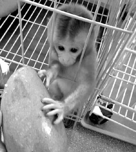 男子朋友圈买石猴被骗2500元 要退款被拉黑