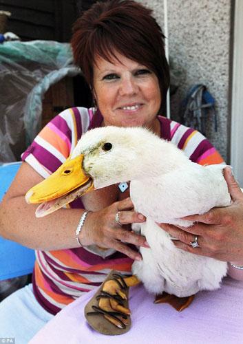 图为主人摩根和她的鸭子