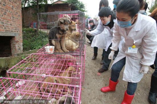 重庆南岸区,专业医生在现场对所有狗狗进行身体检查。图片来源:CFP