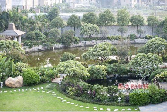 10月11日下午,东莞中堂一村。村支书的豪华别墅里的池塘。南都记者 陈奕启 摄
