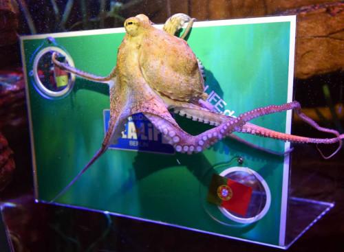 高清图-章鱼预测德国胜葡萄牙