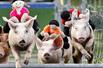 小猪背玩偶赛跑