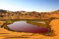 百名中国企业家出资治理阿拉善沙漠