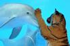 海豚欲与企鹅老虎交朋友