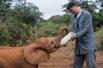 姚明非洲给小象喂奶