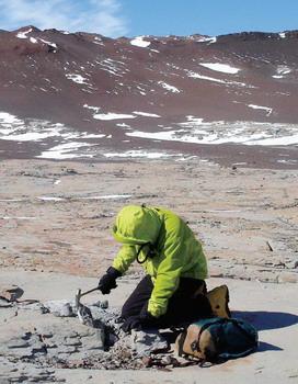 科学家推断南极洲曾充当气候灾难避难所