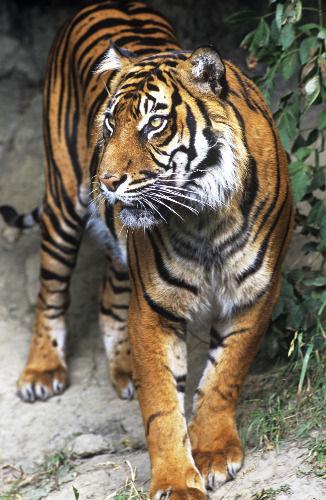 盘点世界10大濒临灭绝野生动物[1]- 中国日报网