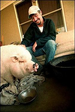 除了学习,还得养猪