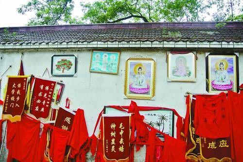 毛坦厂中学的学生和家长拜百年枫树。