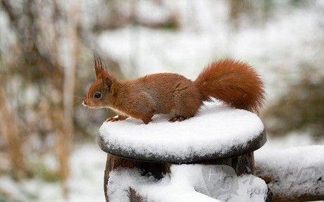 萌图大集合:动物们的冬日雪地剪影(双语)
