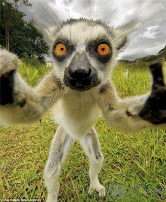 双语:10张全球最佳动物自拍照(图)