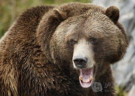 男孩动物园喂食黑熊 被咬断手臂(组图)