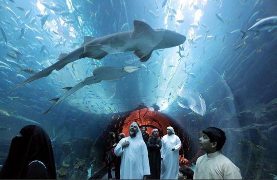 在阿联酋购物中心里有令人印象深刻的水族馆隧道,游客可以在这里看到鲨鱼