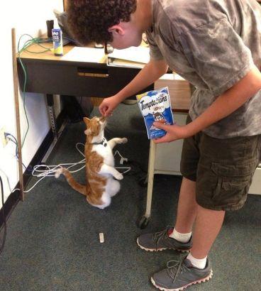 猫咪入读美国高中并获学生证成人气学生-美国高中网